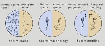 semen parameter